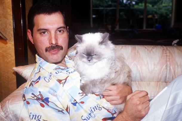 Freddiemercurywithcat1