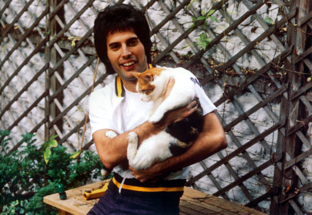 Freddiewithcat1